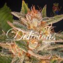 Delicious Cheese Candy Seeds 3er