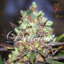 Delicious Cotton Candy Seeds 3er