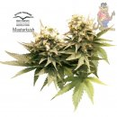 Dutch Passion Masterkush Seeds