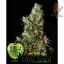 EVA High Level Seeds 9er