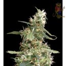 Greenhouse Arjans Ultra Haze #1 Seeds 5er