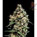 Greenhouse Jack Herer Seeds 5er