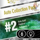 Paradise Seeds Auto Collection pack#2 AUTO Seeds 6er