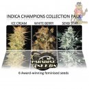 Paradise Seeds Indica Champions Pack Seeds 6er