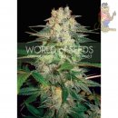 WOS Afgan Kush Ryder AUTO Seeds Autoflowering Collection Seeds 3er