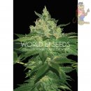 WOS Afgan Kush Seeds Pure Origin Collection Seeds 3er