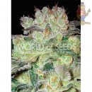 WOS Afgan Kush x White Widow Seeds Medical Collection Seeds 3er