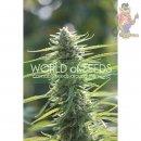 WOS Colombian Gold Seeds Pure Origin Collection Seeds 3er