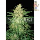 WOS Sweet Coffee Ryder AUTO Seeds Autoflowering Collection Seeds 3er