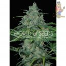 WOS Wild Thailand Seeds Pure Origin Collection Seeds 3er