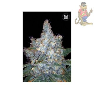 Bulk Seed Bank - Auto Blueberry Berry 10er Packung auto-feminisiert