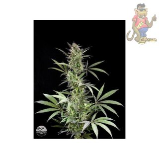 DINAFEM Blue Fruit Seeds