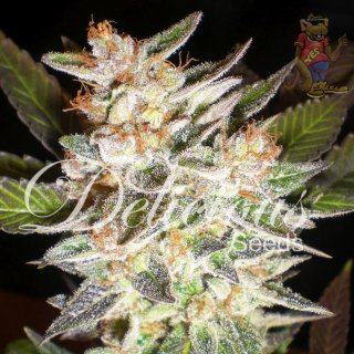 Delicious Cheese Candy AUTO Seeds
