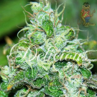 Delicious Fruitty Chronic Juice Seeds