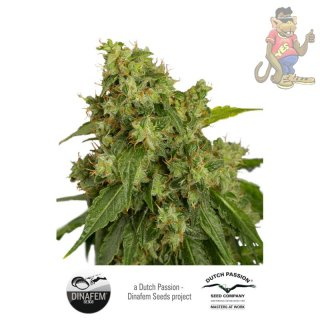 Dutch Passion Xtreme AUTO Seeds