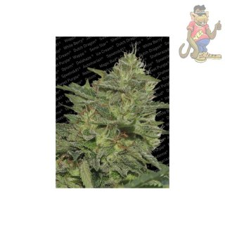 Paradise Seeds Original Cheese Seeds 3er
