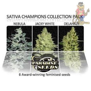 Paradise Seeds Sativa Champions Pack Seeds 6er