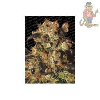 Paradise Seeds White Berry Seeds