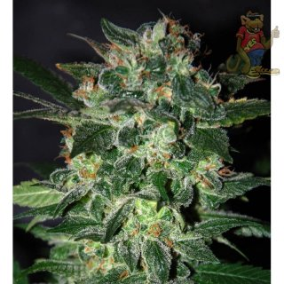WOS Domina Star Seeds Legend Collection Seeds