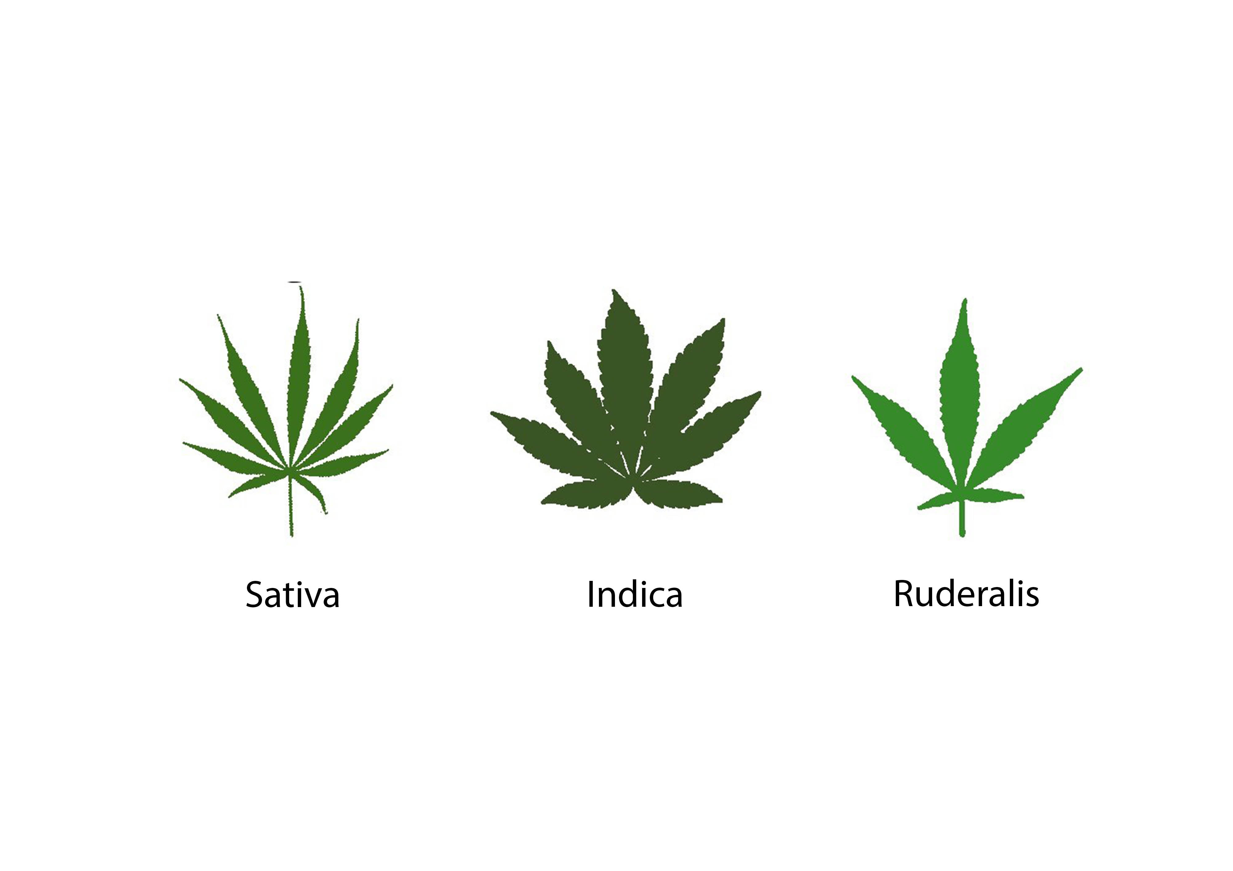 Cannabis Sorten