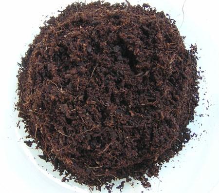 Cocos Fasern als Pflanzmedium für Hanf
