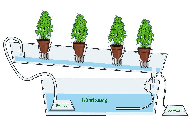Hydroponic System Skizze Cannabis