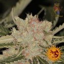 Barneys Farm Bad Azz Kush Seeds 5er