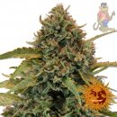 Barneys Farm Bad Azz Kush Seeds 10er