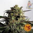 Barneys Farm Blueberry OG Seeds 5er