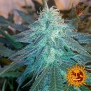 Barneys Farm Triple Cheese Seeds