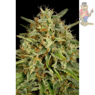 DINAFEM Strawberry Amnesia Seeds