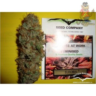 Dutch Passion Euforia Seeds