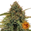 Barneys Farm Bad Azz Kush Seeds 3er