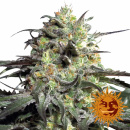 Barneys Farm Peyote Cookies Seeds 3er