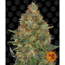 Barneys Farm Pineapple Express AUTO Seeds 3er