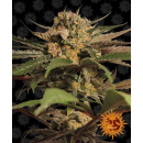 Barneys Farm Violator Kush Seeds 3er