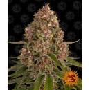 Barneys Farm Pink Kush Seeds 3er
