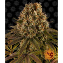 Barneys Farm Strawberry Lemonade Seeds 3er