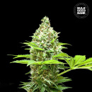 Bulk Seed Bank - Sherbet Power 10er Packung feminisiert