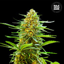 Bulk Seed Bank - Auto Banana Monkey 5er Packung...