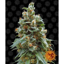 Barneys Farm Vanilla Kush Seeds