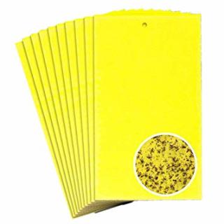 Gelbtafel - 10 Stück