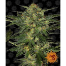 Barneys Farm LSD Seeds 10er