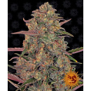 Barneys Farm Pineapple Chunk Seeds 10er