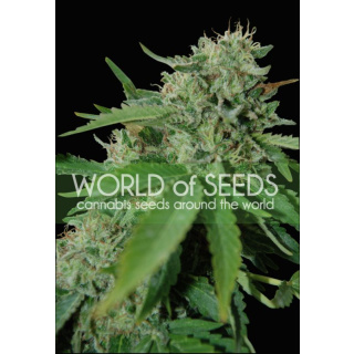 WOS Brazil Amazonia Seeds Pure Origin Collection Seeds 12er