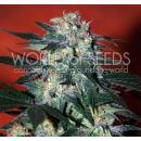 WOS Delirium Seeds Diamond Collection
