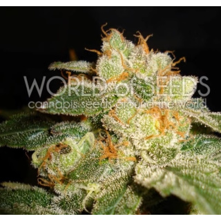 WOS Privilege Seeds Diamond Collection