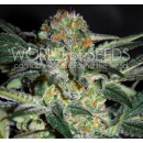 WOS High Tension Seeds Diamond Collection 7er Packung...
