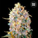 Bulk Seed Bank - Bigger Bud