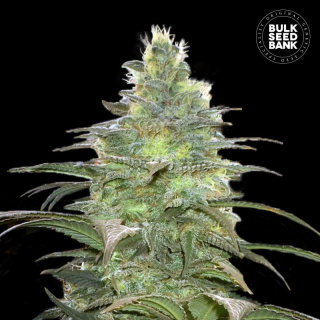 Bulk Seed Bank - Blueberry Berry
